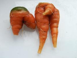 Bei uns darf auch krummes Gemüse wachsen