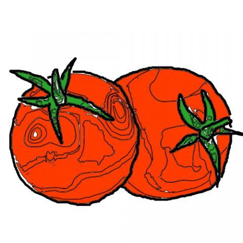 Ab wann tomaten vorziehen